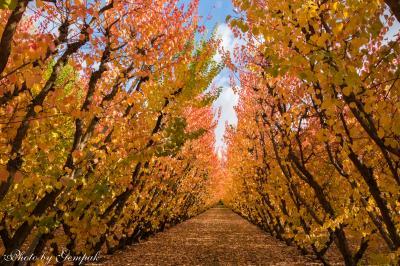 Kia ora! 秋のニュージーランド南島ドライブ旅行(15)WanakaからTe Anauまでは沿線に見どころいっぱい