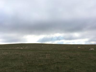 海外旅行初心者が行く イギリス一人旅(3)アフィントンの白馬、スウィンドン