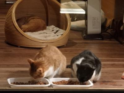 猫庭旅館の「てしま旅館」へ