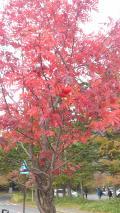 日光〜坤六峠の紅葉を見に。