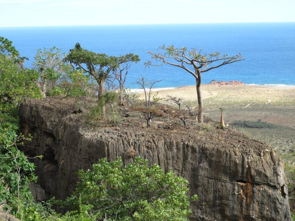 ソコトラ島の画像 p1_22