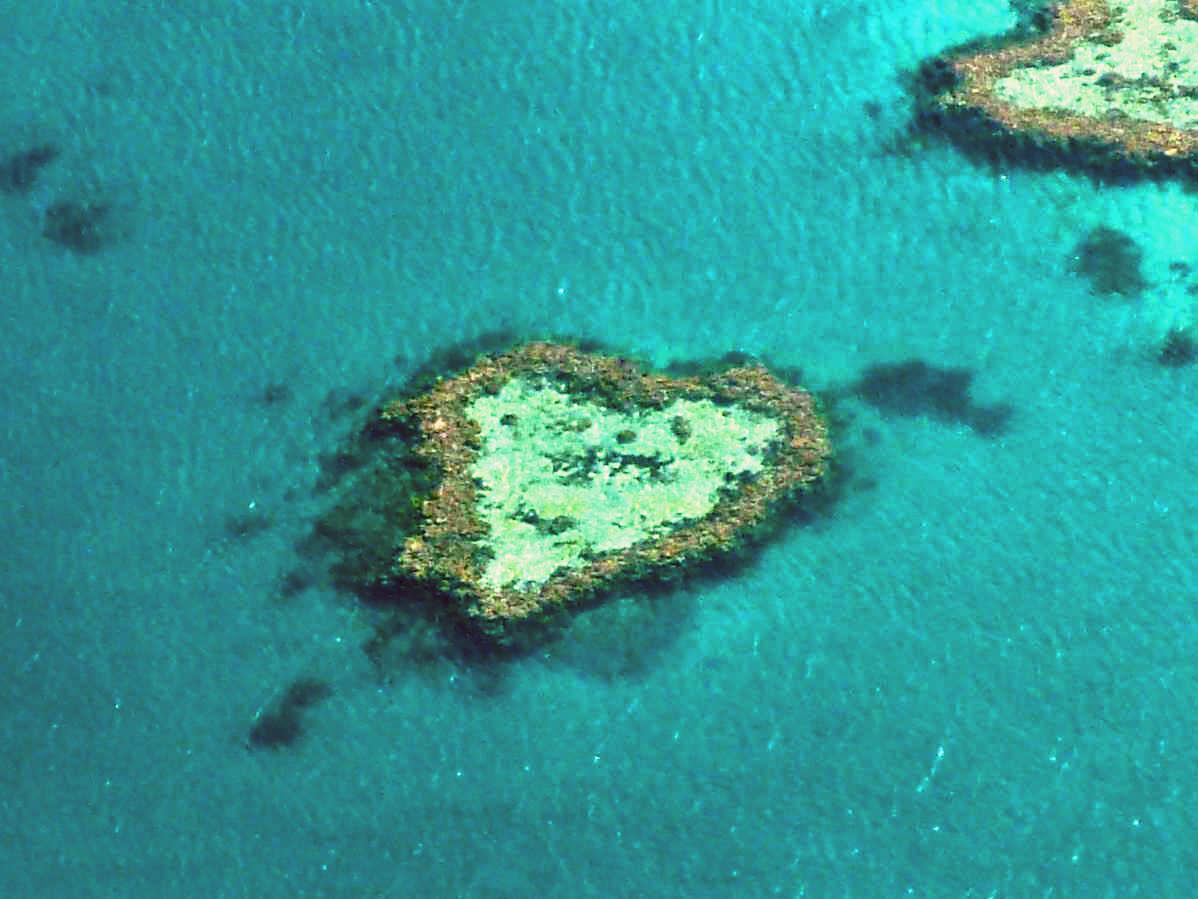 ハミルトン島の画像 p1_39