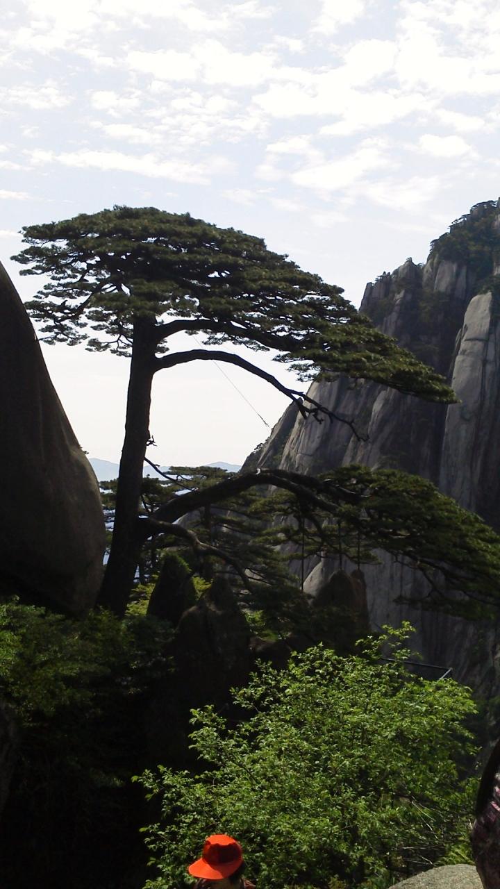 黄山の画像 p1_24