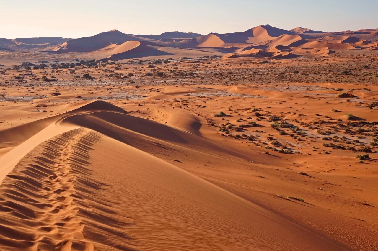 ナミブ砂漠の画像 p1_22