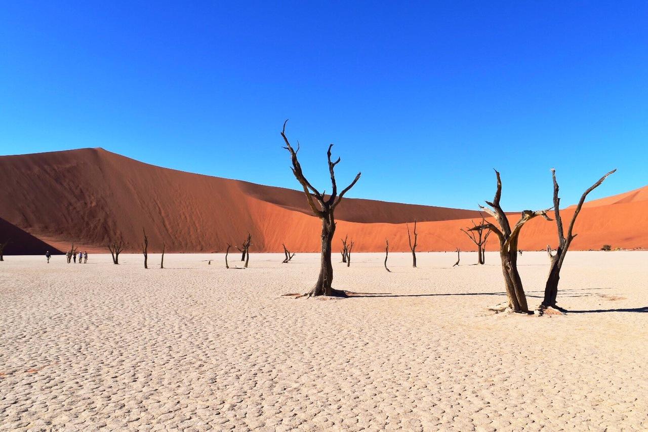 ナミブ砂漠の画像 p1_29