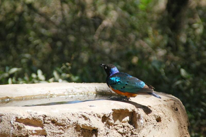 セレンゲティ国立公園の画像 p1_22