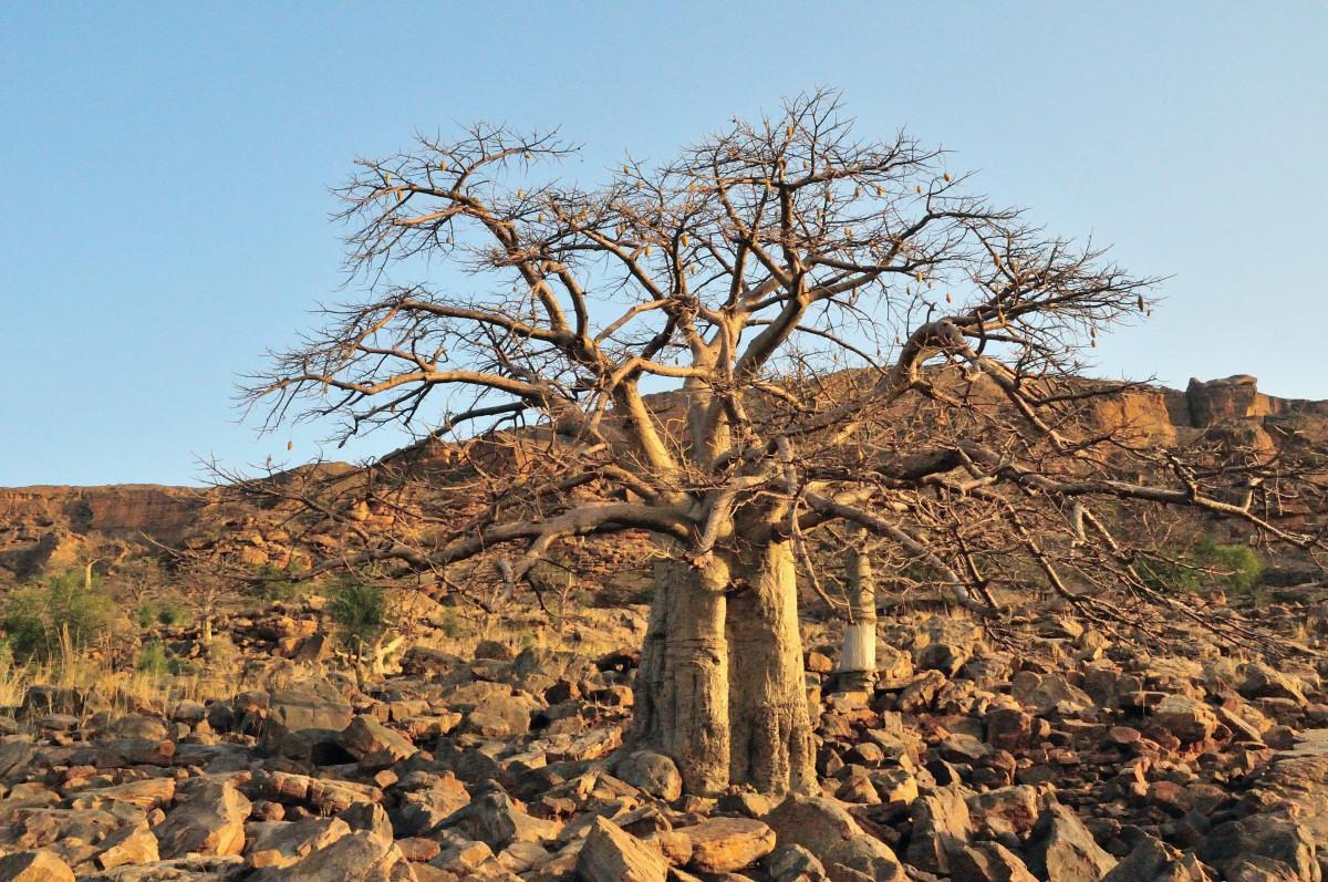 バンディアガラの断崖の画像 p1_4
