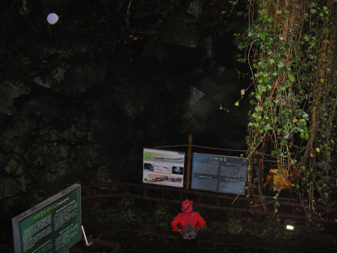 済州の火山島と溶岩洞窟群の画像 p1_16