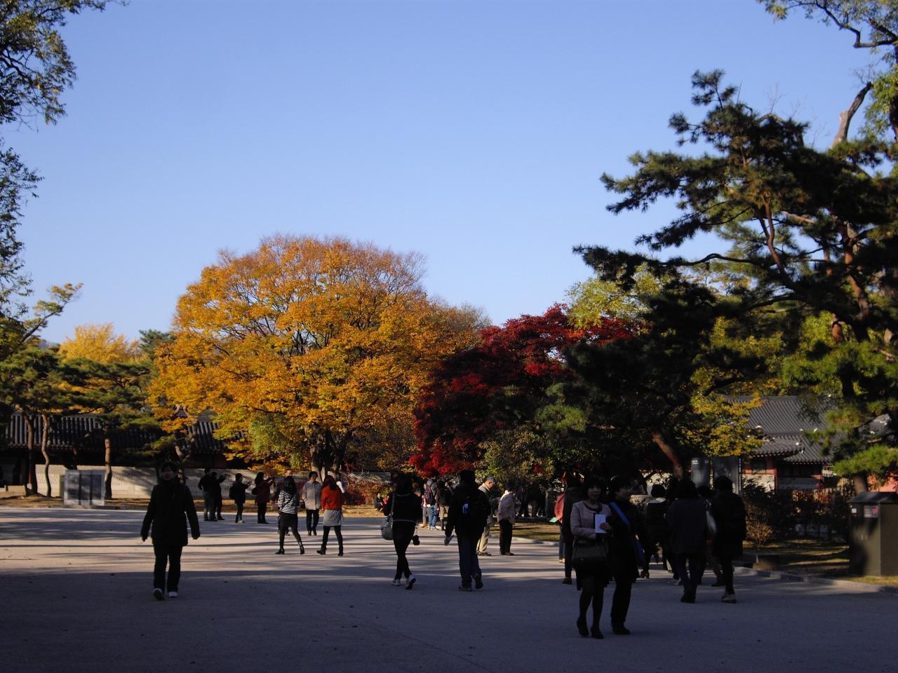 昌徳宮の画像 p1_32