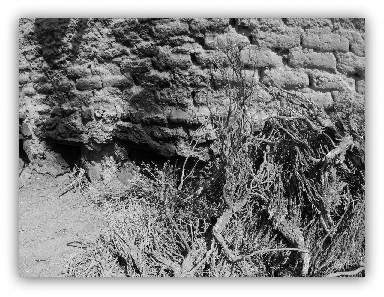 アランフエスの画像 p1_33
