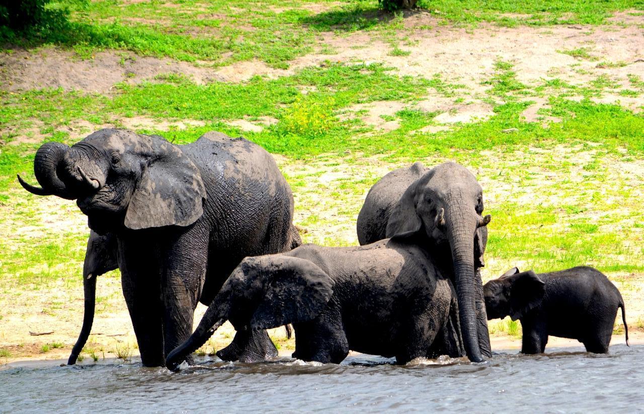 アフリカゾウの画像 p1_28