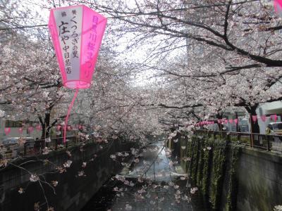 目黒川(桜並木)
