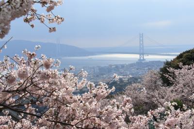 神戸で桜を楽しむなら~おすすめです!