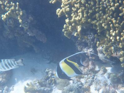 プライベートビーチの魚たち