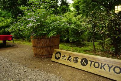 きれいな日本庭園