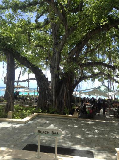 中庭のバニヤンツリー
