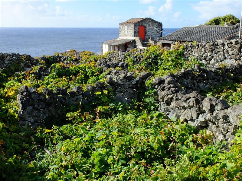 ピコ島の画像 p1_22