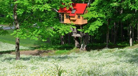 花*花*花の長野旅(2)〜カモミールの白い絨毯が見たくて@カミツレの里