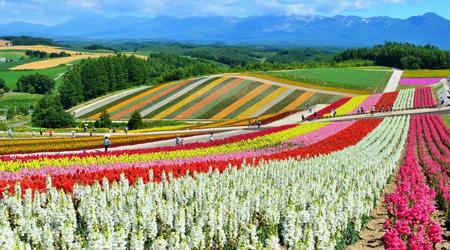 【北海道】夏のベストシーズンに札幌・富良野・美瑛・旭川グルッと周遊+なぜか歌志内の旅