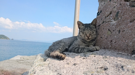 離島さるく 猫いっぱい遺跡いっぱいの相島へ