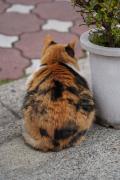 旅猫さん 写真