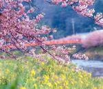 <2月~3月限定>早春の桜ディナープラン(夕朝食付)
