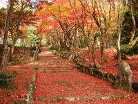 滋賀県湖北地区の紅葉スポットをご紹介