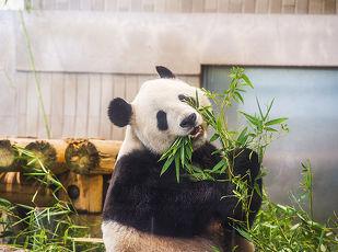 ファミリー応援♪上野動物園入場券付プラン♪ステイ 写真