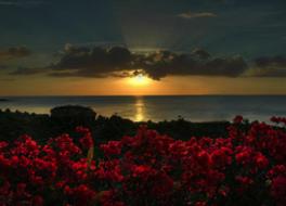 Tanna Evergreen Resort & Tours 写真