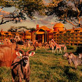 写真:Disney's Animal Kingdom Villas - Kidani Village