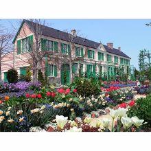 浜名湖ガーデンパークには色とりどりの花が咲き競っています