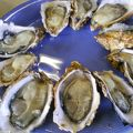 写真:中山牡蠣養殖所