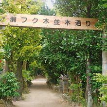 うっそうとした亜熱帯を感じさせる並木,是非散歩を