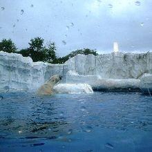 デトロイト動物園!
