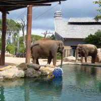タロンガ動物園