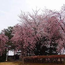 桜運動公園・・・アクアピア周辺