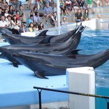 日本で一番楽しい水族館です