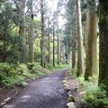写真:箱根旧街道杉並木