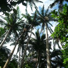 気軽に訪れることのできるジャングル