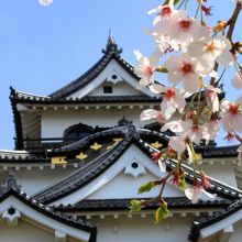 彦根城 美しい天守閣 満開の桜に酔う