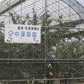 写真:中澤農園