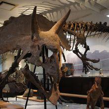 この自然史博物館がかつての隆盛を偲ぶものとなっています