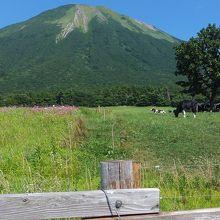 大山の牧場、広々して気持ちがよい