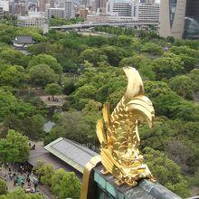 8階展望室からは大阪市内を眺望