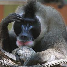 バルセロナ動物園 クチコミ一覧...