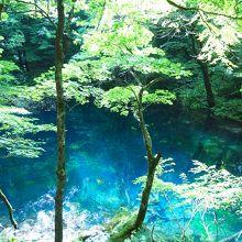 青池、沸壺の池…など見どころたくさん! 言葉では表現できないほどの青さに驚きます!!