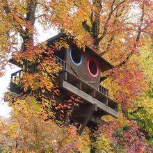 いきなりツリーハウスがお出迎えしてくれました(*~~*)♪