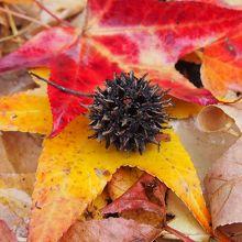 秋がいっぱいみつかるよ!!