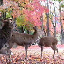 鹿がかわいい