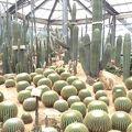 写真:華南植物園
